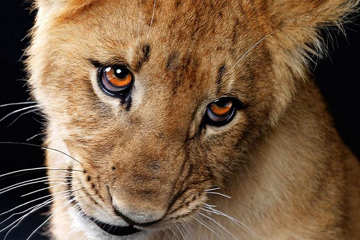Extremamente Lista definitiva dos 20 animais mais fofos do mundo (2/4  II38